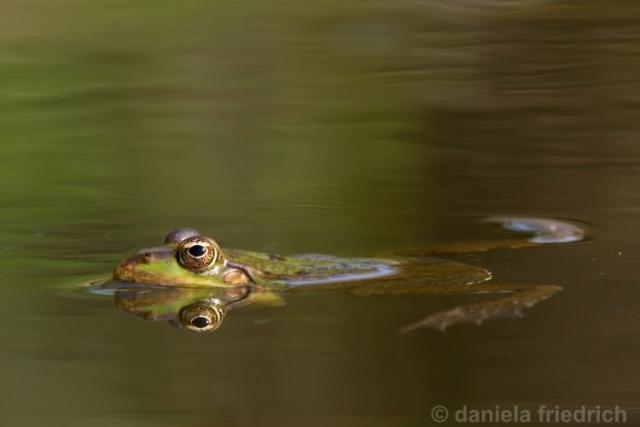 Froschkönig III