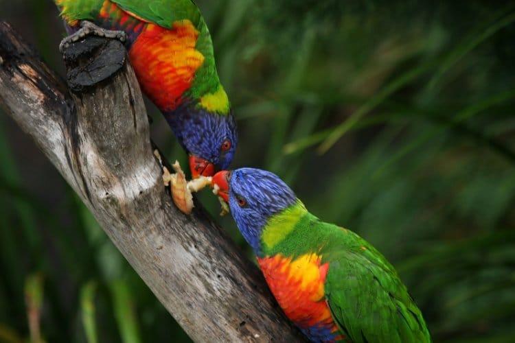 Papageienfutter II