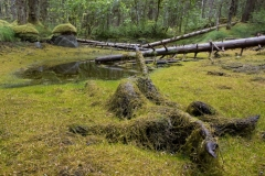 Regenwald