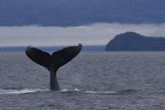 Wal in der Landschaft