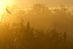 Morgenglühen Stilbild