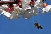 Fleissige Biene II