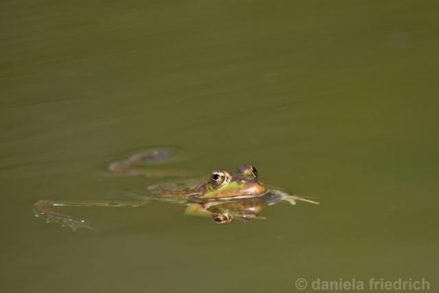 Froschkönig II