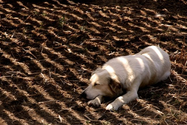 schattenhund